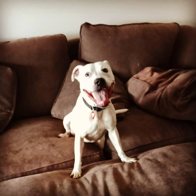 Photo of Braxton