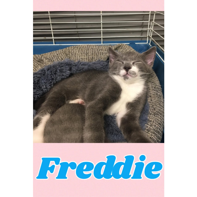 Photo of Floss & Freddie
