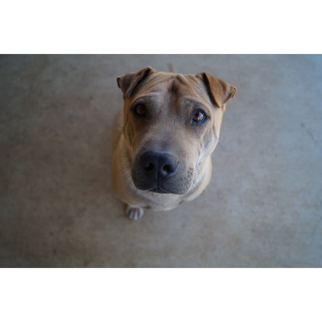 Photo of Bodhi (Adoption Pending)
