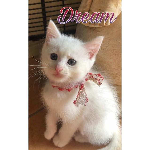 Photo of Dream