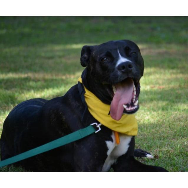 Photo of Floyd (Adoption Pending)