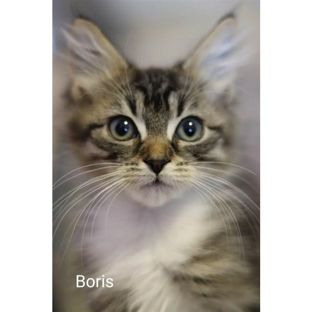 Photo of Boris