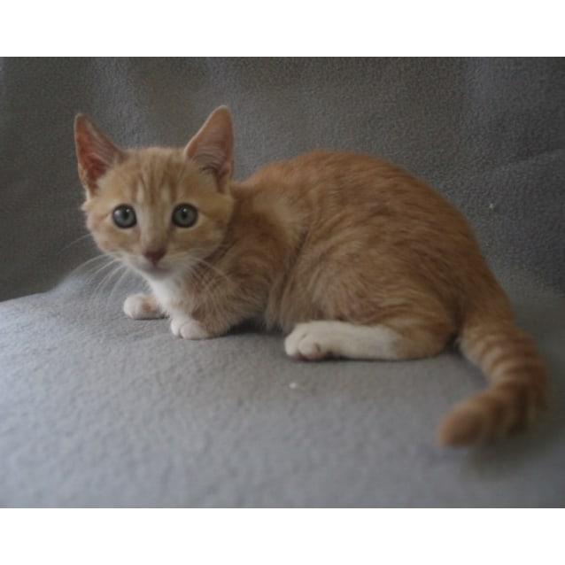 Photo of Otto