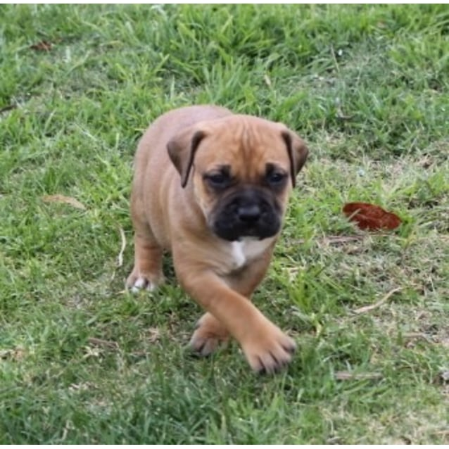 Photo of Puppy Lucy Dl2132