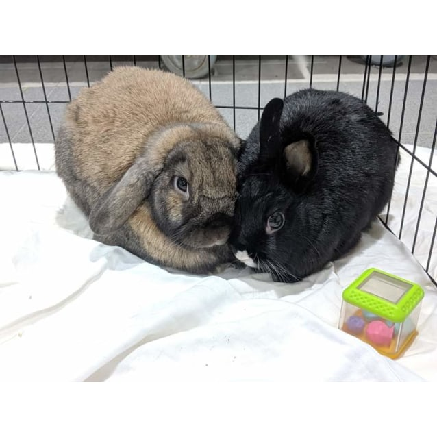 Photo of Sushi And Randy