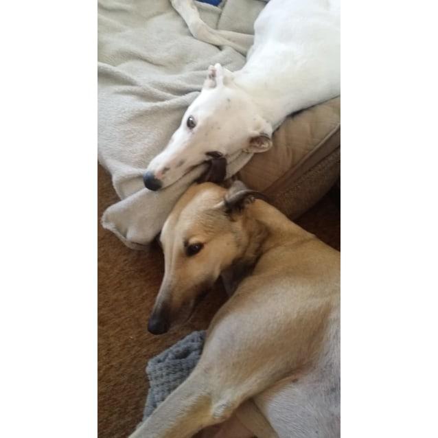 Photo of Minnie & Darcy