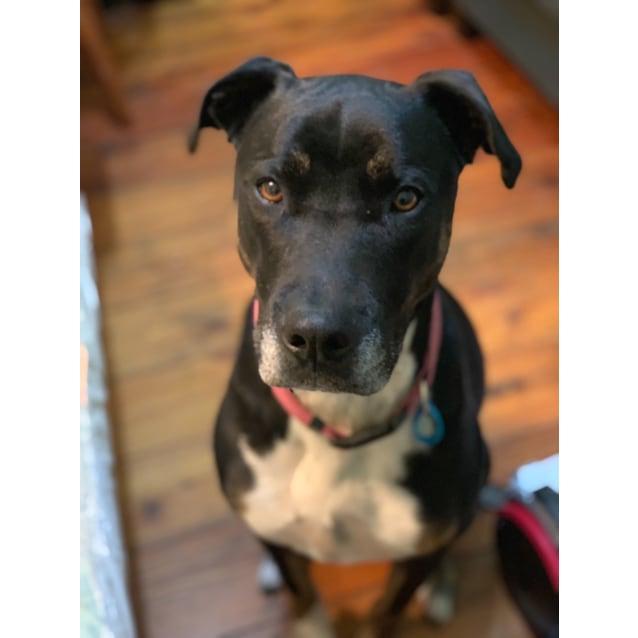 Photo of Coco