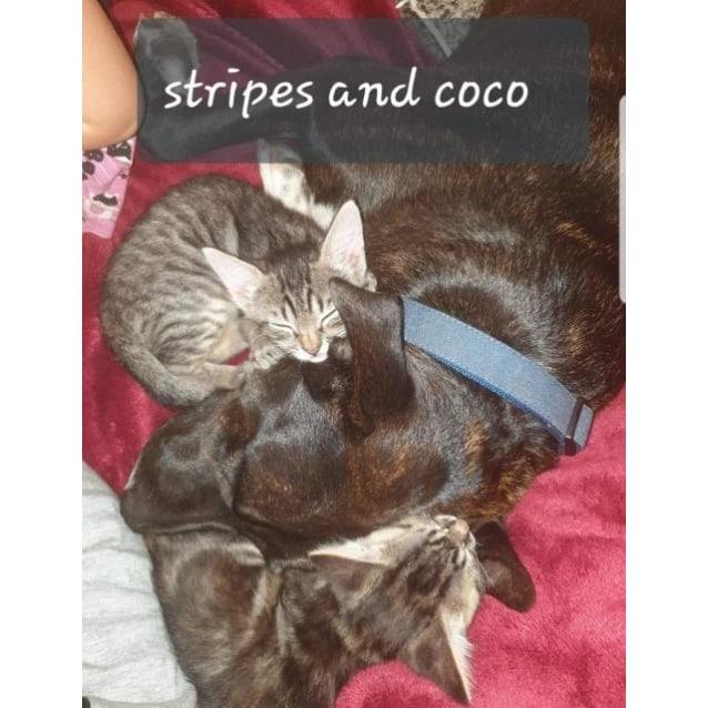 Photo of Stripes