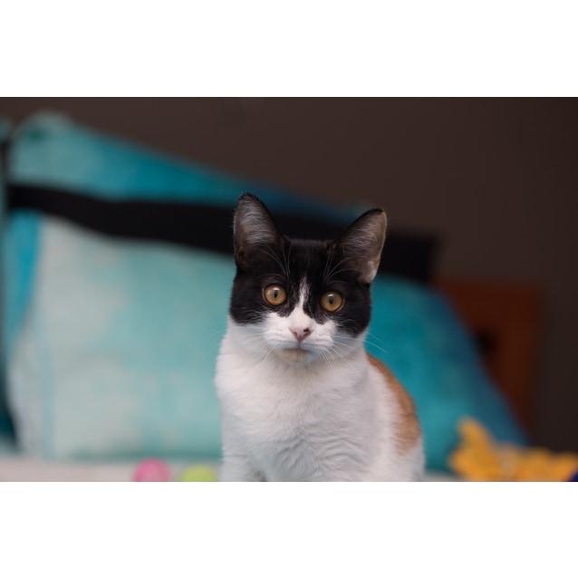 Photo of Scarlett