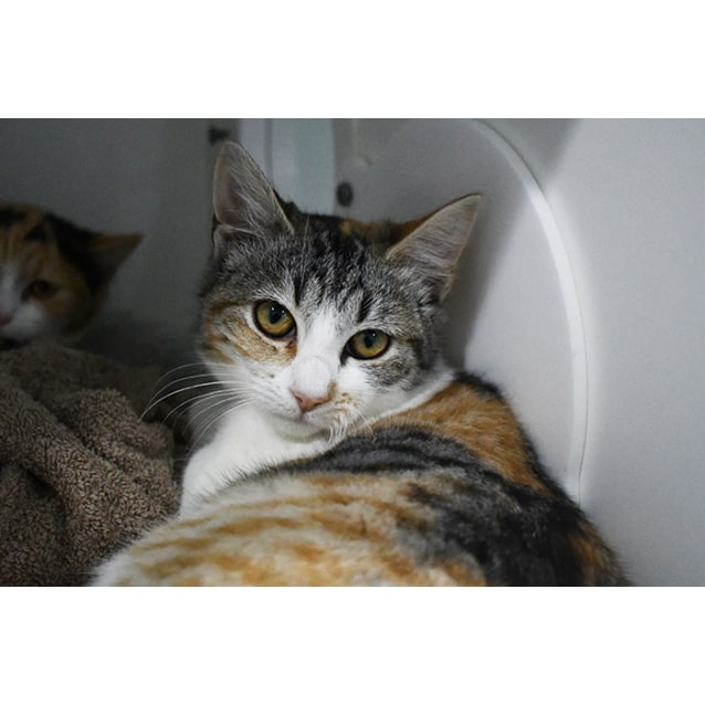 Photo of Layla 7485 Campbelltown Acf