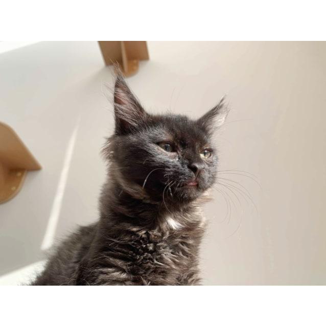 Photo of Winky