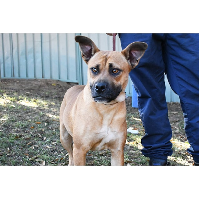 Photo of Sunny 31594 Campbelltown Acf