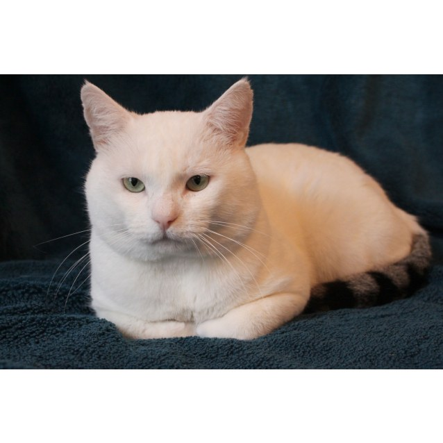 Photo of Ignacious  Meet Me Neko Hq/Cat Lounge Preston