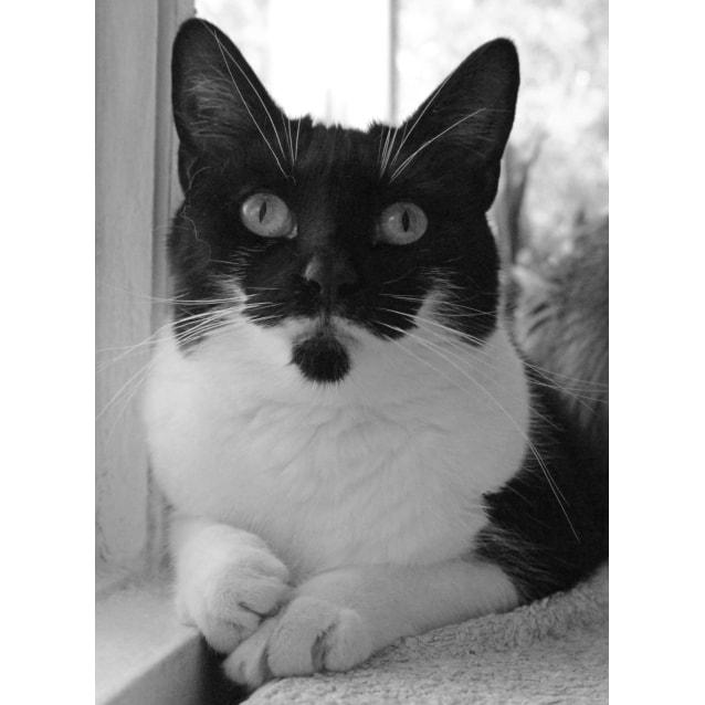 Photo of Princess Dusty Sprinkles   Located In Preston