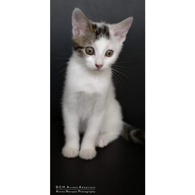 Photo of Akari