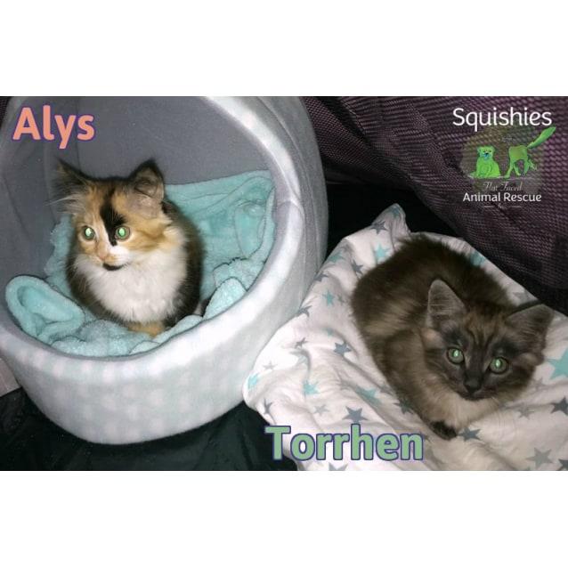 Photo of ✨ Alys ✨