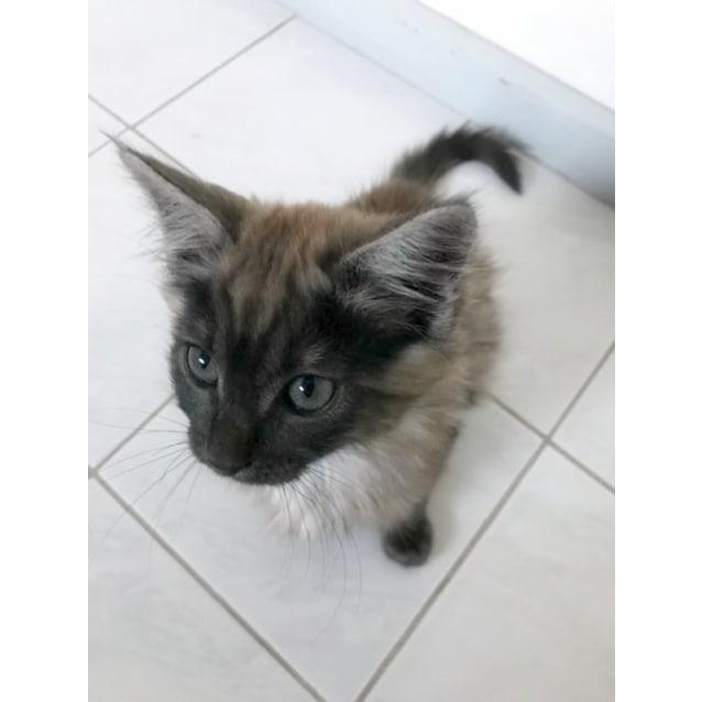 Photo of ✨ Torrhen ✨