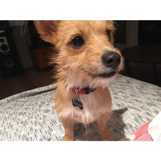 Photo of Evie
