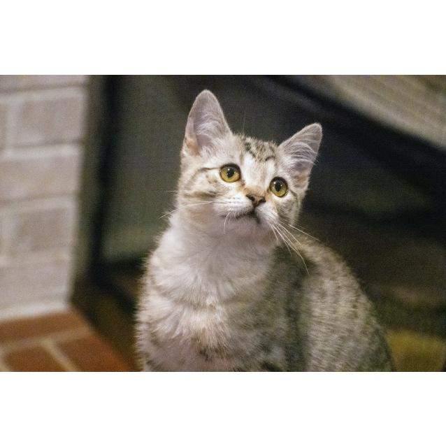 Photo of Bjorn ^^Dandy Cat Rescue^^