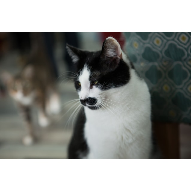 Photo of Bruno   Meet Me At Cat Lounge, Neko Hq Preston
