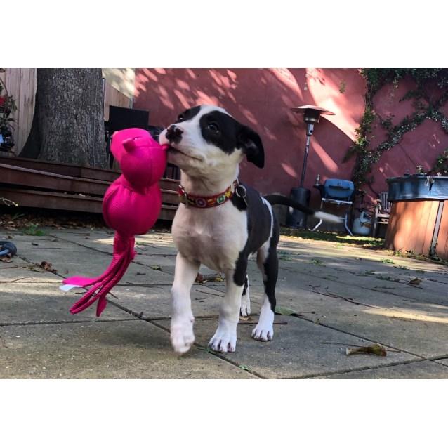 Photo of Pongo