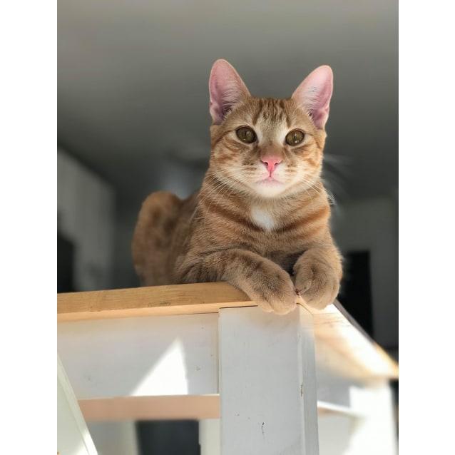 Photo of Pika