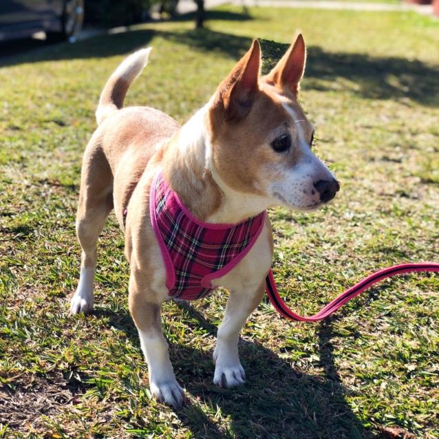 Photo of Princess Pea