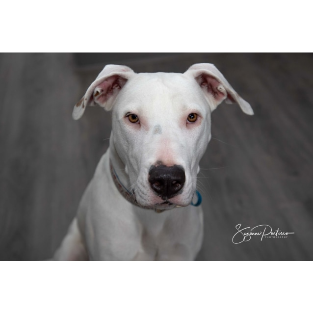 Photo of Cardi (Foster Carer Needed)