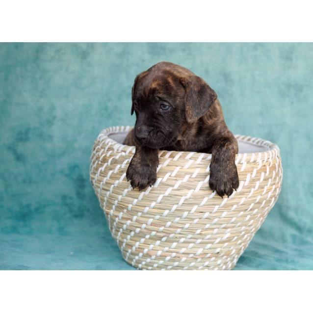 Photo of Puppy Chuck Dl2127
