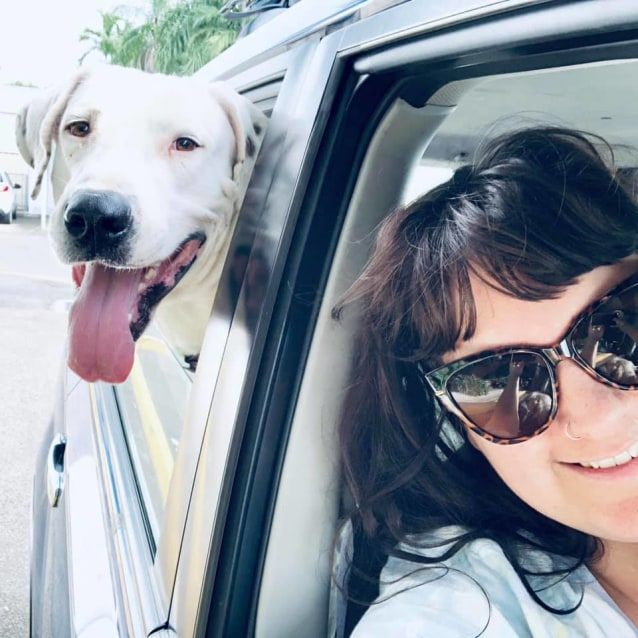 Photo of Simon (Dog)