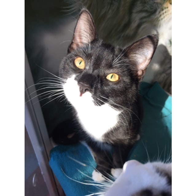Photo of Figaro