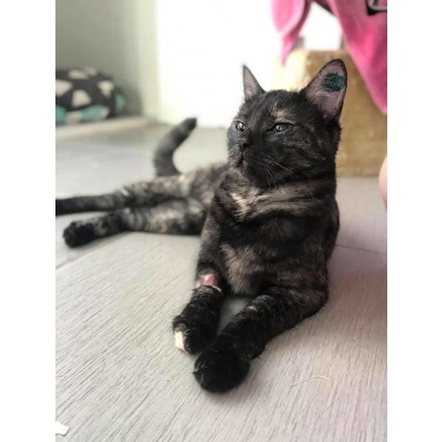 Photo of Coco (Cat)