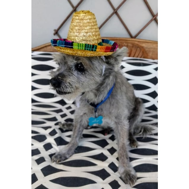 Photo of Gizmo 🐸