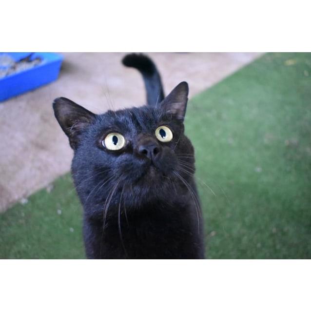 Photo of Bluey