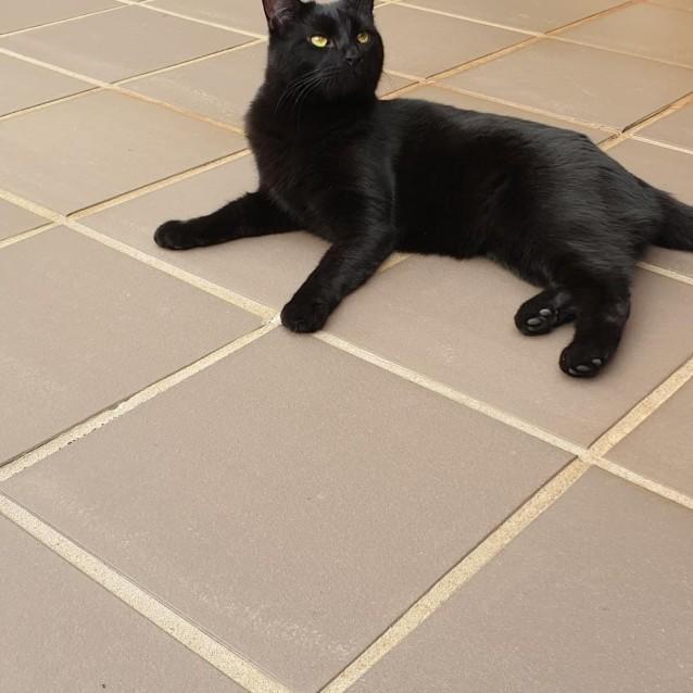 Photo of Jaxson (Located In Bentleigh)