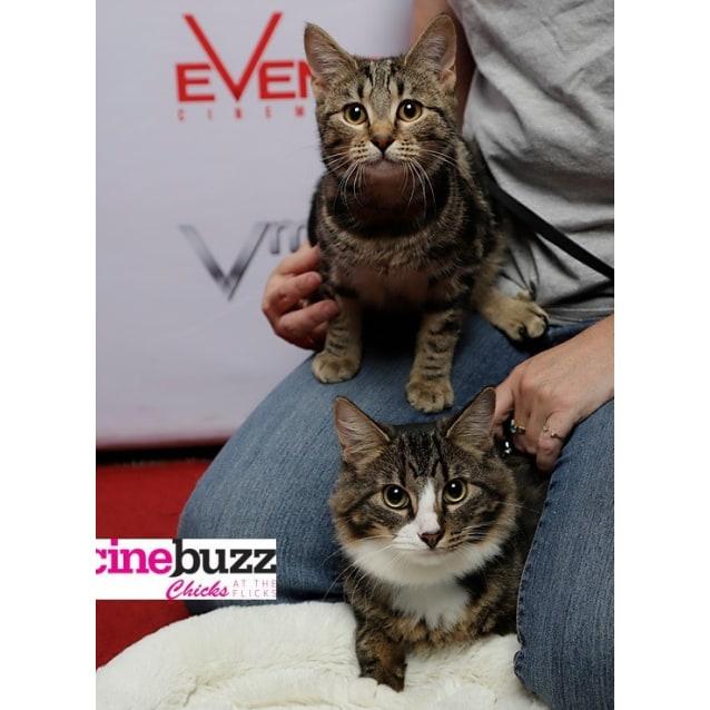 Photo of Gidget & Albie