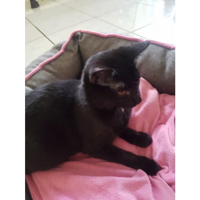 Photo of Black Opal