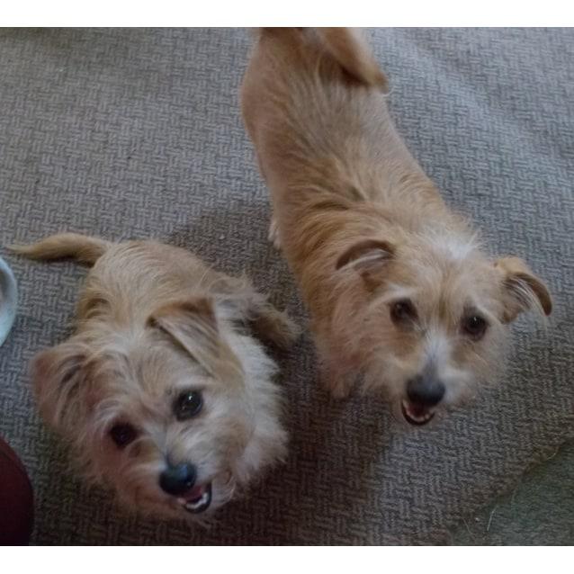 Photo of Chocko And Bruiser