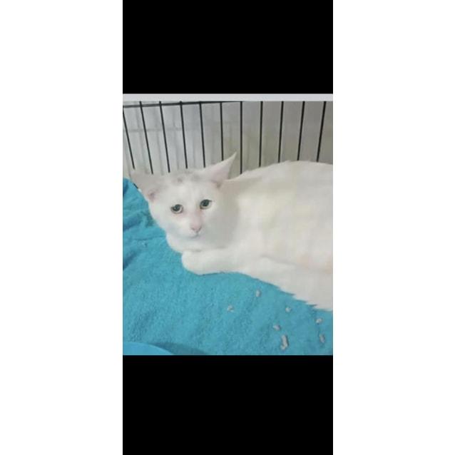 Photo of Rescue Kitten   Bianca