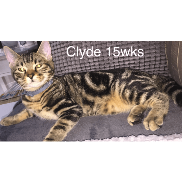 Photo of Clyde