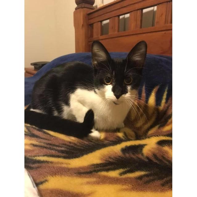 Photo of Timon