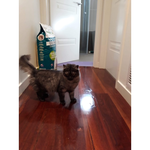 Photo of Disco   Meet Me @Vets In Endeavour Hills