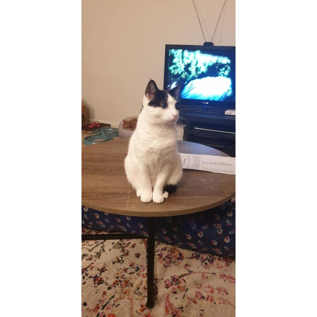 Photo of Pep (Located In Ringwood East)