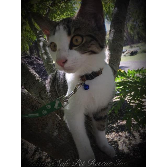 Photo of Diago
