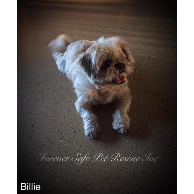 Photo of Billie & Leo