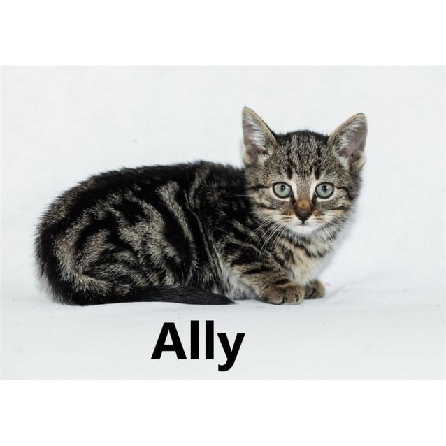 Photo of Ally