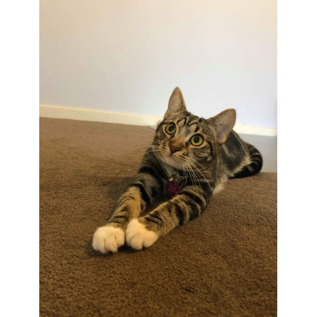 Photo of Bambi (Located In Narre Warren South)