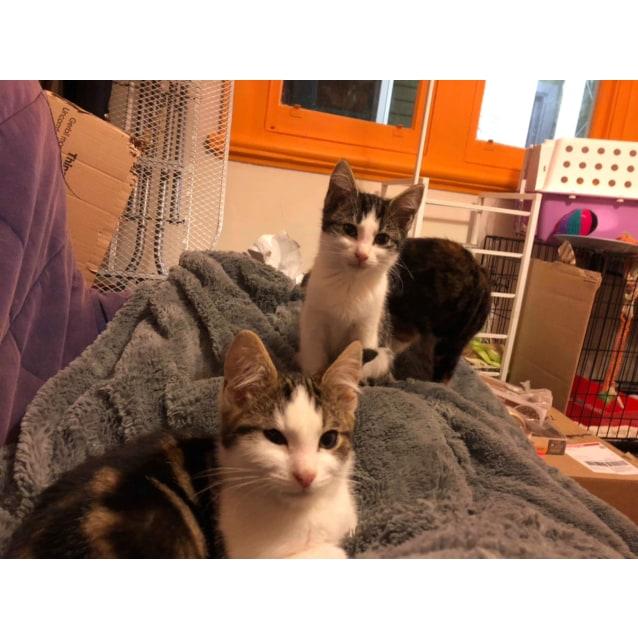 Photo of Irwin  Meet Me At Cat Lounge/Neko Hq Preston