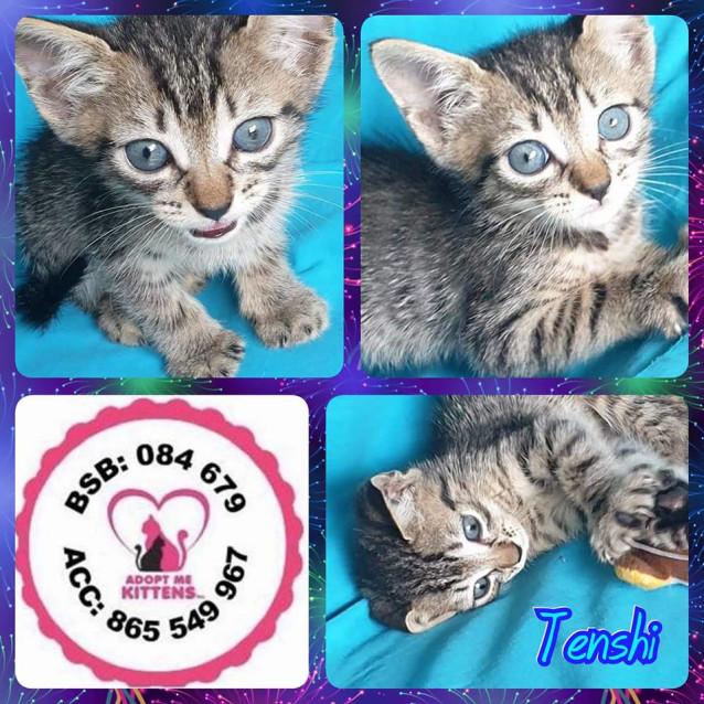 Photo of Tenshi
