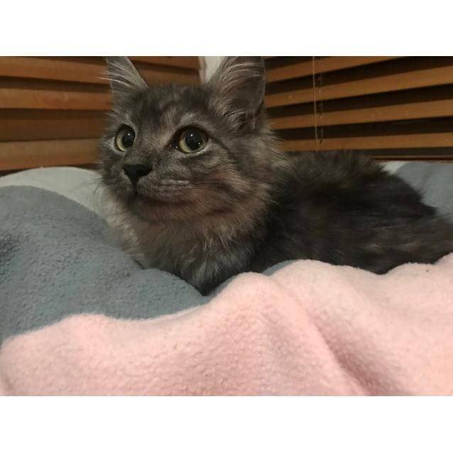 Photo of Momo (Located In Cheltenham)
